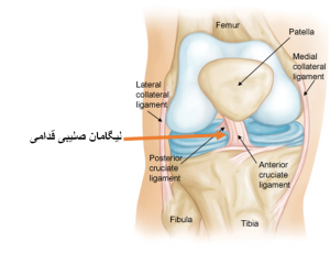 ligament-injury-2